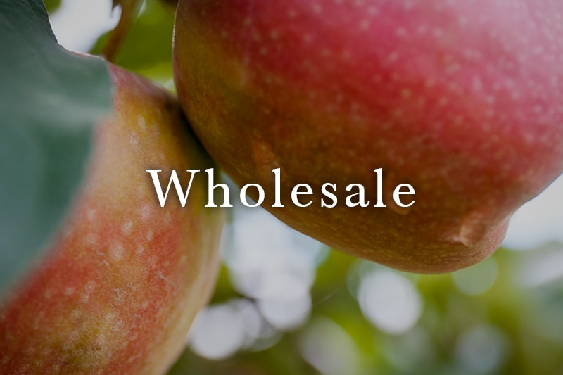 Wholesale_Link-min